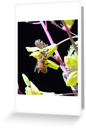 Honey Bee by EOS20