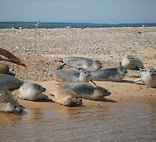 Seals sunbathing by Tanya Housham