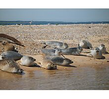 Seals sunbathing Photographic Print