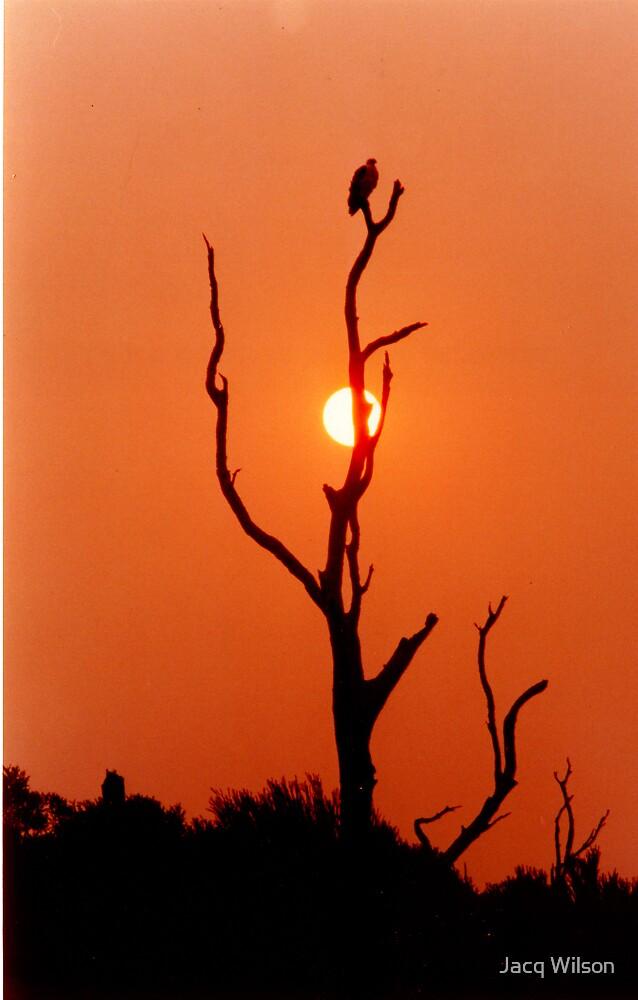 Bushfire Sea Eagle by Jacq Wilson
