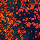 furious red leaves by Iris Lehnhardt