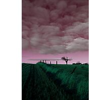 Rihanna Tree, In The Pink! Photographic Print