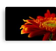 Crizanteme Canvas Print