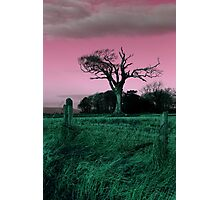 The Rihanna Tree, Playing With Pink! Photographic Print