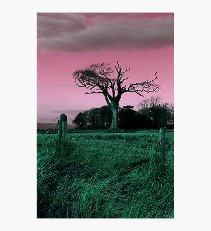 Rihanna Tree, Playing With Pink! Photographic Print