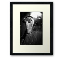 EYE OF THE HUNTER! Framed Print