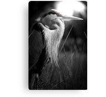 EYE OF THE HUNTER! Canvas Print