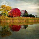 Reflecting by Dawn M. Becker