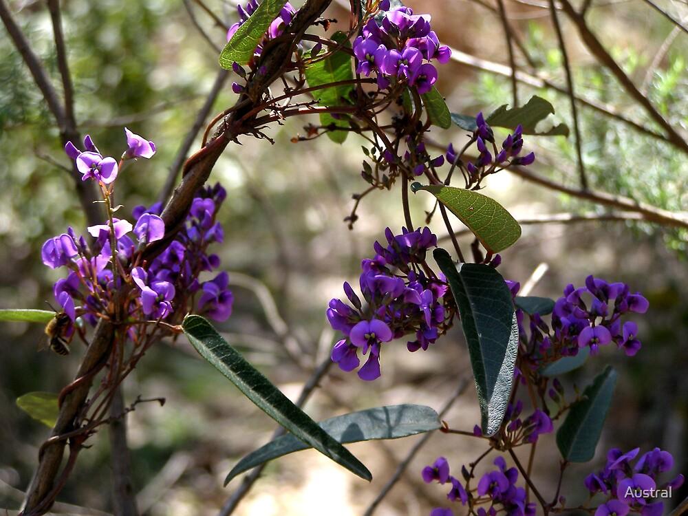 Purple Flower by Austral