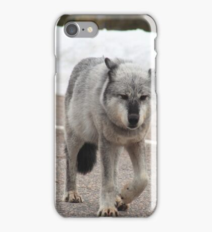 Grey wolf on road iPhone Case/Skin