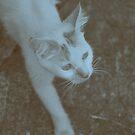 Kitty Spy by tropicalsamuelv