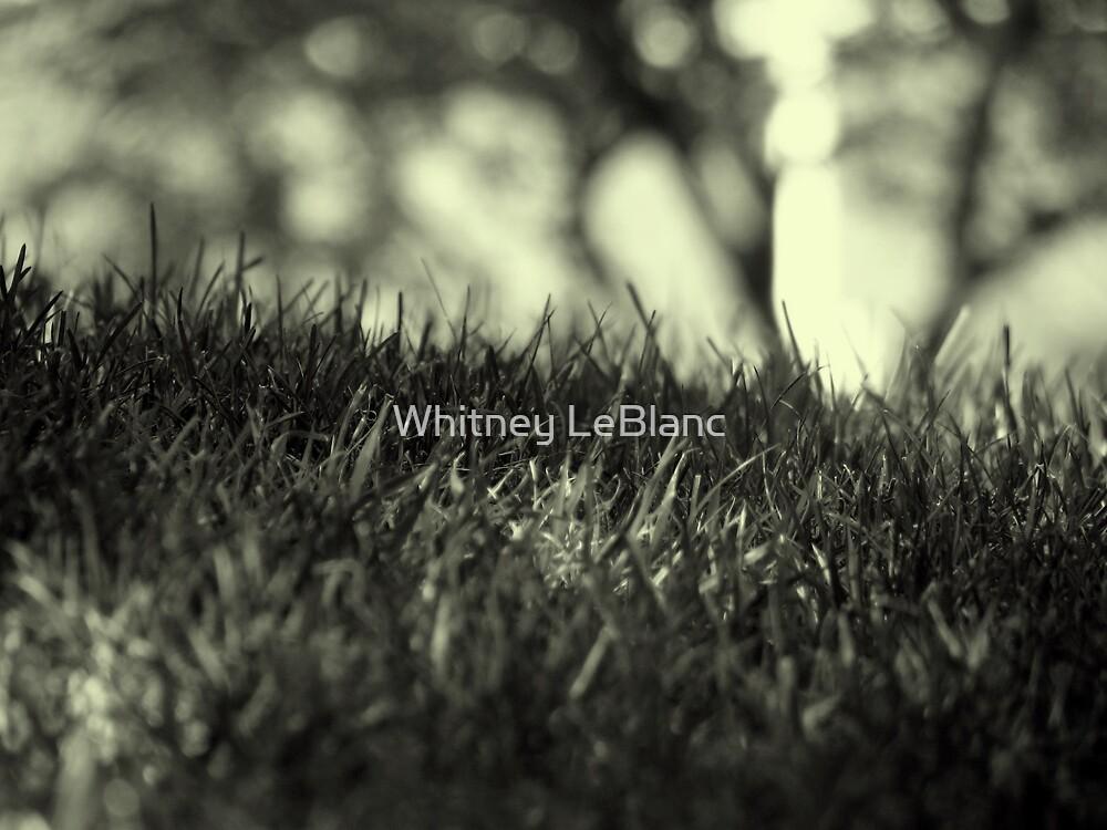 grass by Whitney LeBlanc