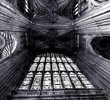 window by willd