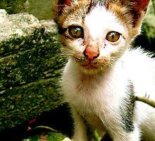 Cat Portrait by Rajiv Ashrafi