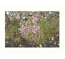 Alpin Plant Art Print