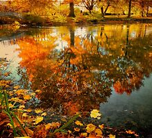 Reflection of the fall by LudaNayvelt