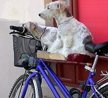 Another Day in Sibiu for the Bicycle Dogs by Amy Marie Adams