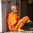Saffron at rest, Laos by indiafrank