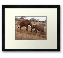 Elephants, Samburu, Kenya Framed Print