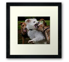 Dogs with game face on .6 Framed Print