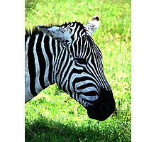 Zebra at Lake Nakuru Photographic Print