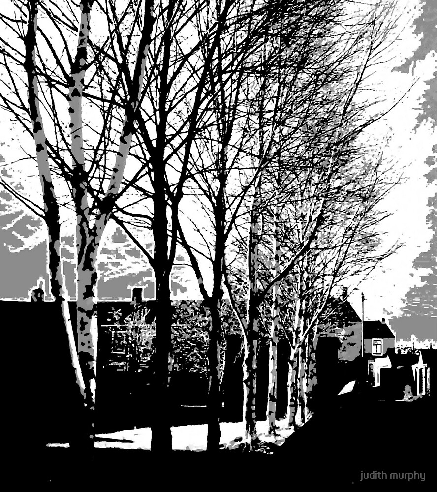 Town trees by judith murphy