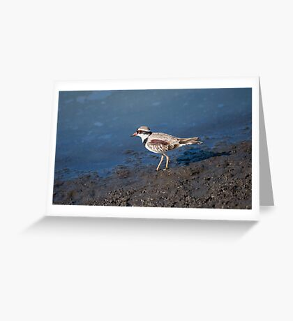Black-fronted Dotterel Greeting Card