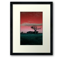 The Rihanna Tree, Really Wild! Framed Print
