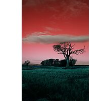The Rihanna Tree, Really Wild! Photographic Print