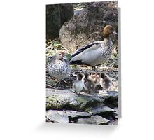 Australian Wood Ducks & Ducklings Greeting Card