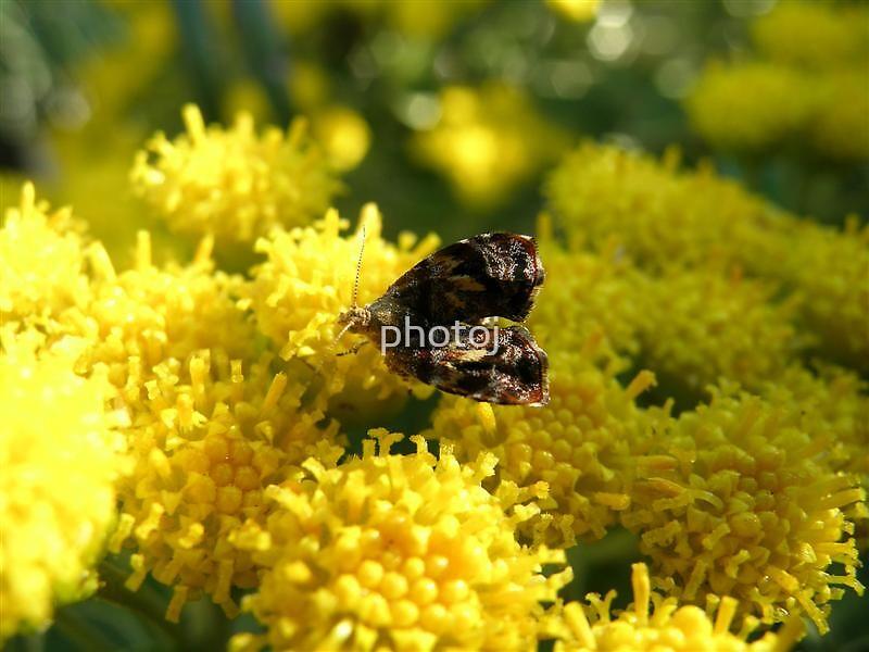 photoj  Macro Bug & Flowers by photoj
