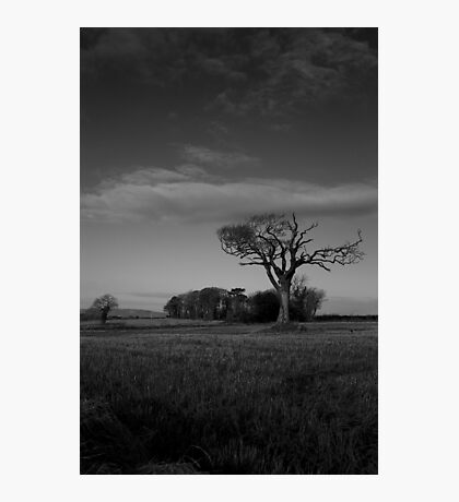 Rihanna Tree, Monochrome! Photographic Print