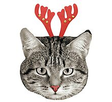 Red Nose Reindeer Cat! Photographic Print