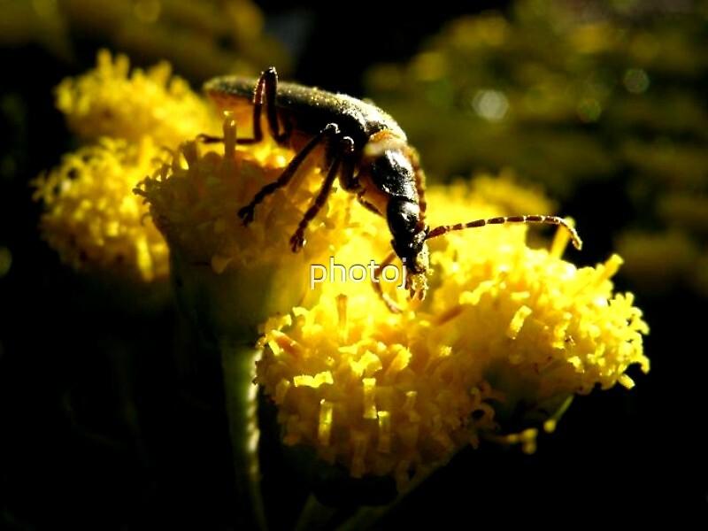 photoj  Macro Bugs by photoj