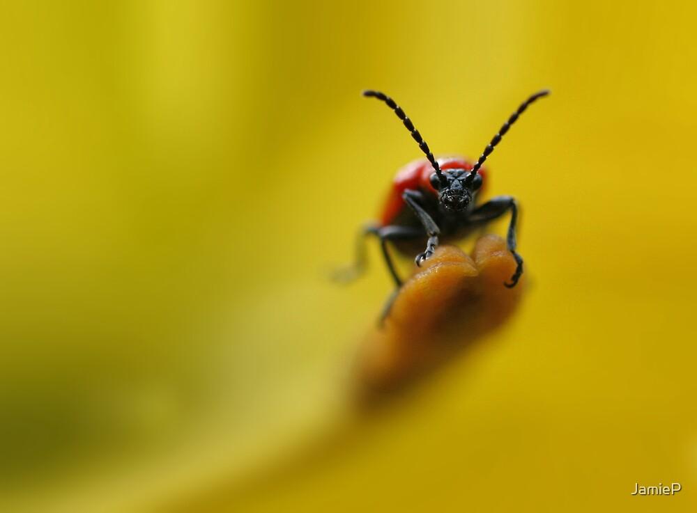 Ugly Bug by JamieP