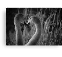 Swans Loveheart Canvas Print