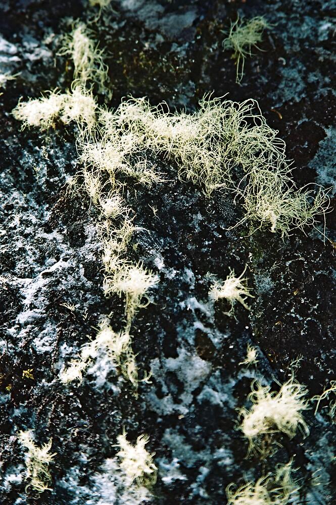 Mossy Rocks by bethgardner