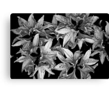 Rhododendron  bw Canvas Print