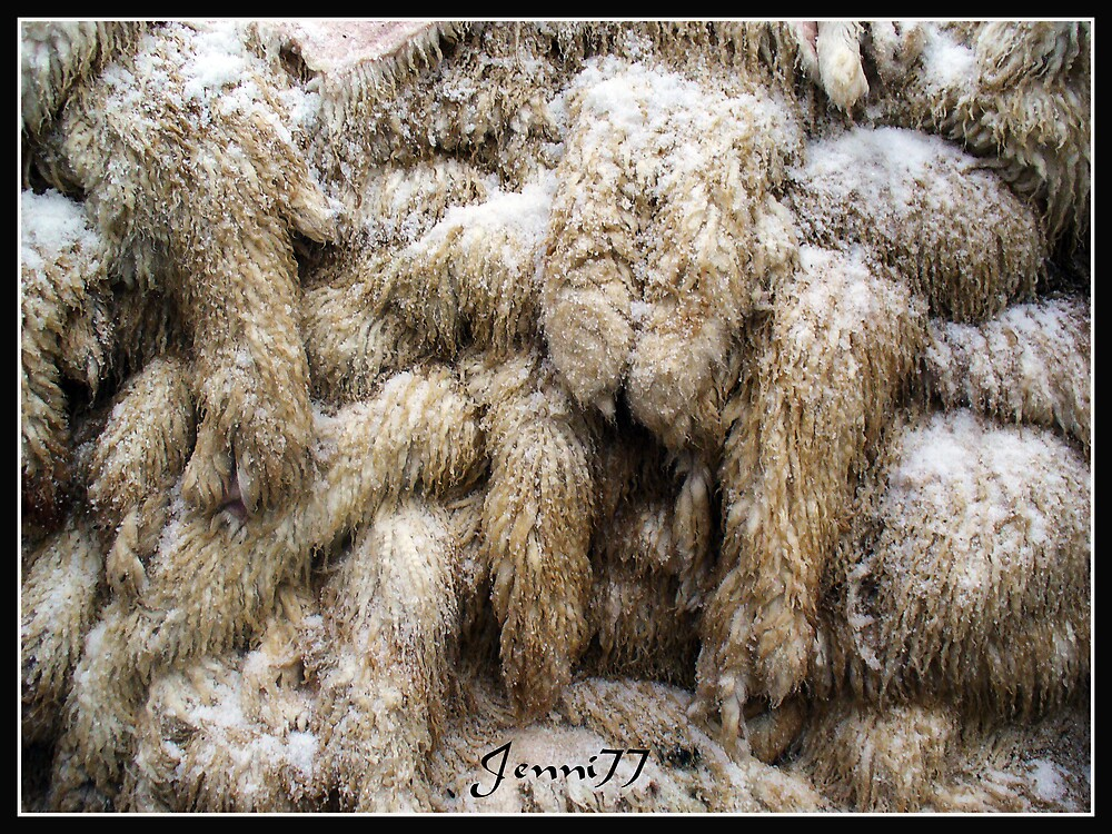 Salted Sheep Skins by Jenni77
