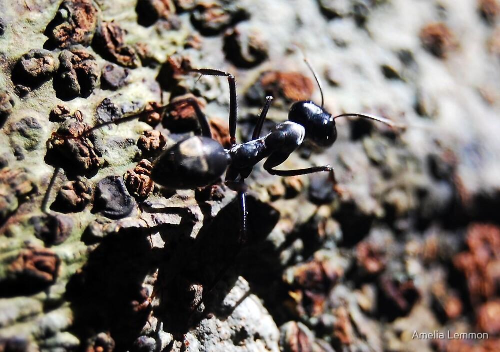 ant by Amelia Lemmon