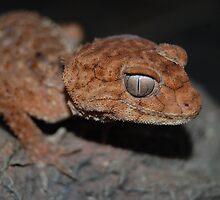 gecko by Amelia Lemmon