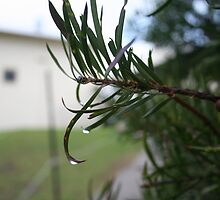 Heavy Leaf by Mushi5