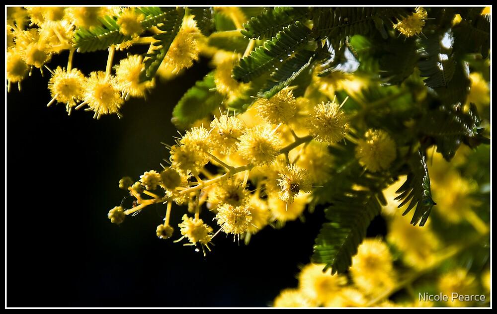 Aussie Wattle Tree by Nicole Pearce