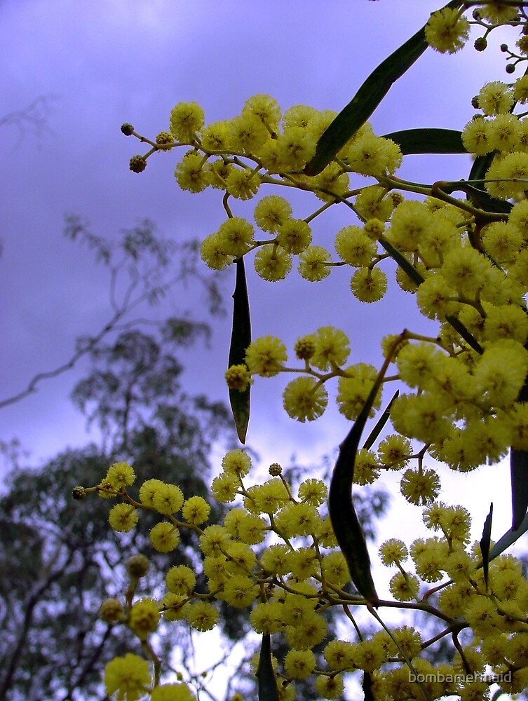 Wattle is Australia by bombamermaid