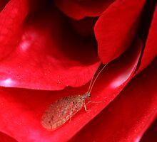 Little bug by Robyn Lakeman