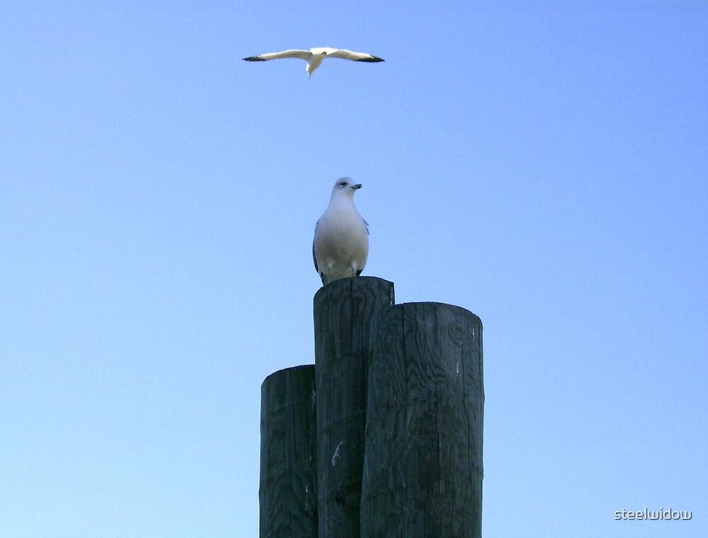 Seagulls by steelwidow