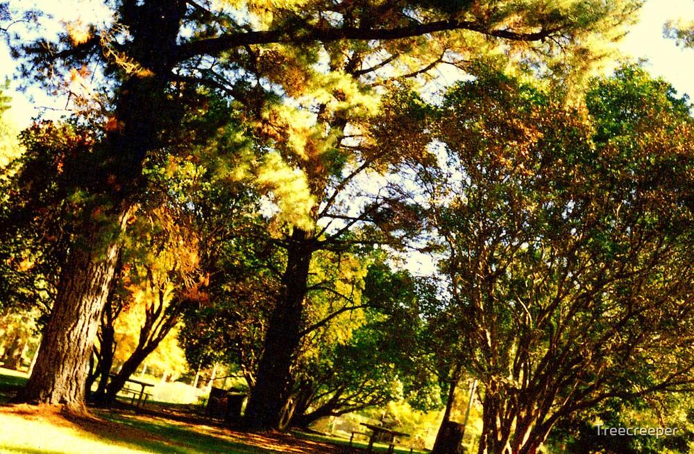 Park by Treecreeper