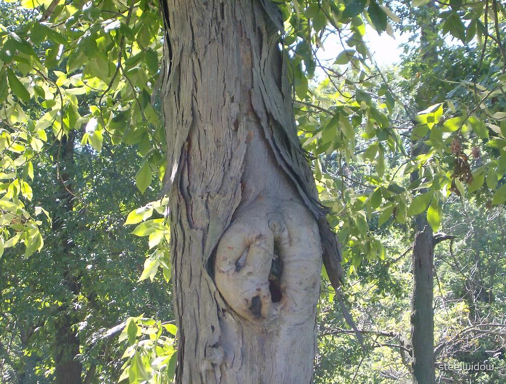 Weird Shaped Hole in Tree by steelwidow