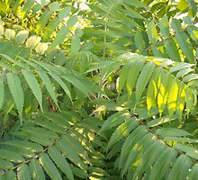 Green Fern Tree by steelwidow
