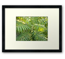 Green Fern Tree Framed Print